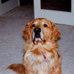 Major, our Southern California boy. We adopted him when we lived in San Diego.
